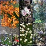 the-garden-photo-challenge-to-prove-eve-a-small-garden-can-be-interesting-all-year-collage-of-photos-for-week-one