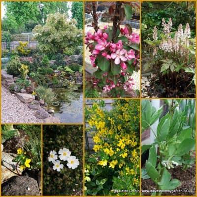 Garden Photo Challenge