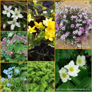 The-Garden-Photo-Challenge-to-prove-even-a-small-garden-can-be-interesting-all-year-Collage-of-photos-for-week-4