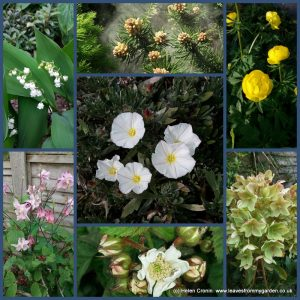 The-Garden-Photo-Challenge-to-prove-that-even-a-small-garden-can-be-interesting-all-year-Collage-of-photos-for-week-5