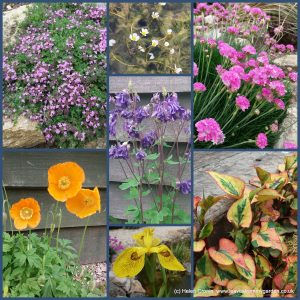 The-Garden-Photo-Challenge-to-prove-that-even-a-small-garden-can-be-interesting-all-year-Collage-of-photos-for-week-6
