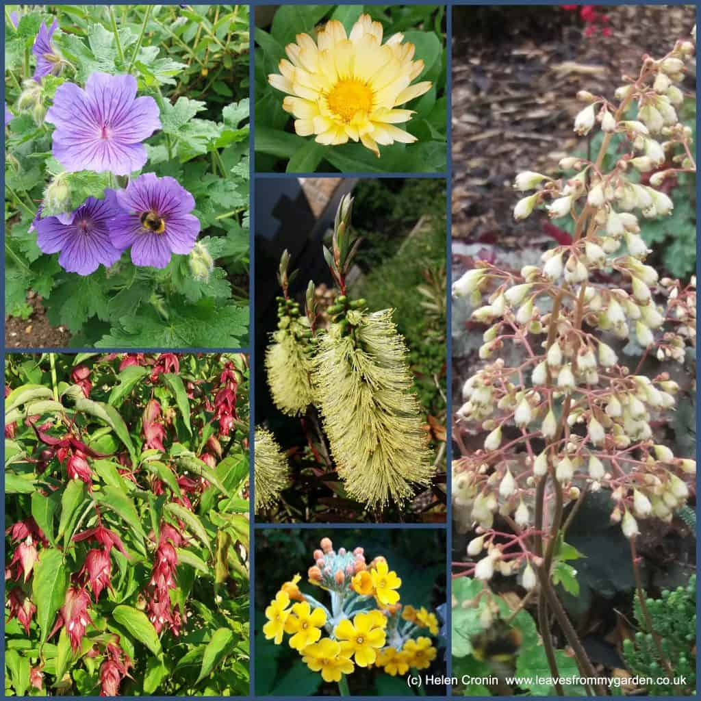 Dovewood Garden Photo Challenge Week 8