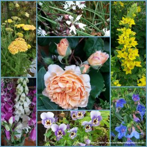 The-Garden-Photo-Challenge-to-prove-that-even-a-small-garden-can-be-interesting-all-year-Collage-of-photos-for-week-9
