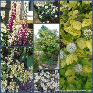 The-Garden-Photo-Challenge-to-prove-that-even-a-small-garden-can-be-interesting-all-year-Collage-of-photos-for-week-7