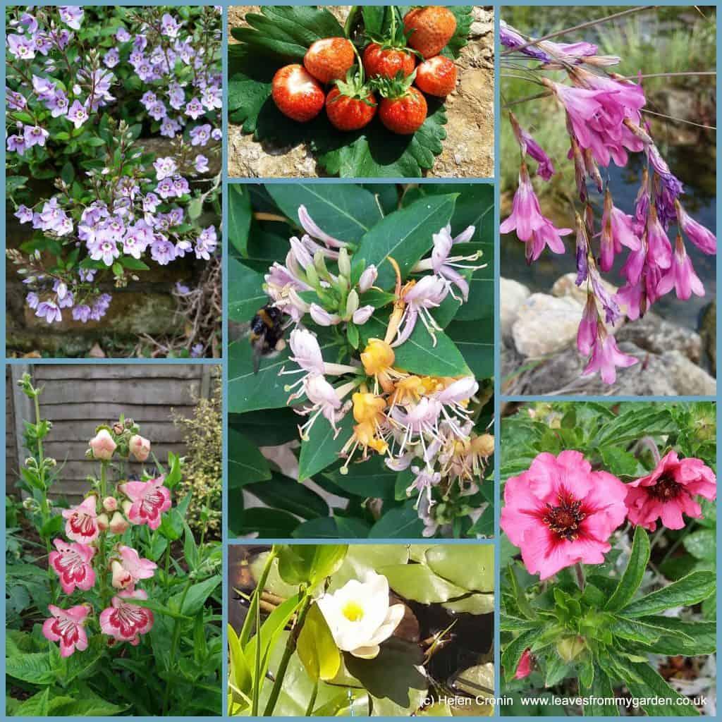 Dovewood Garden Photo Challenge week 10