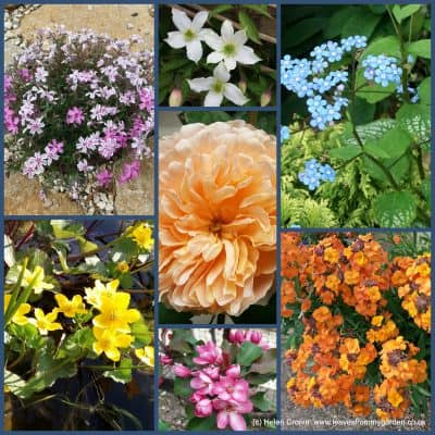 A World of Colour – in the hands of a gardener