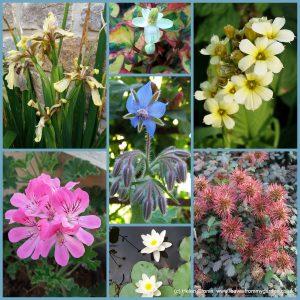 Dovewood garden Photo Challenge week11