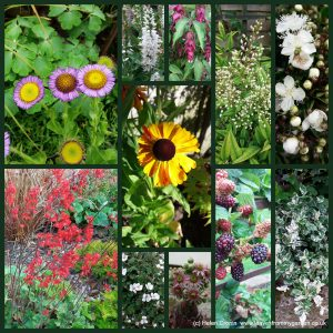 The-Garden-Photo-Challenge-to-prove-that-even-a-small-garden-can-be-interesting-all-year-Collage-of-photos-for-week-12