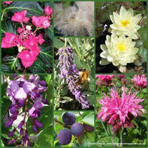Dovewood Garden Photo Challenge Week14