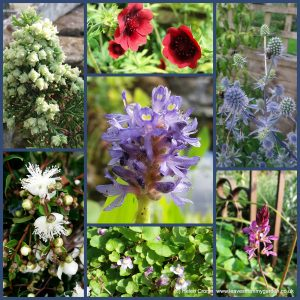Dovewood Garden Photo Challenge Week 16