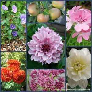 Dovewood Garden Photo Challenge Week 17