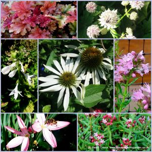The-Garden-Photo-Challenge-to-prove-that-even-a-small-garden-can-be-interesting-all-year-Collage-of-photos-for-week-18