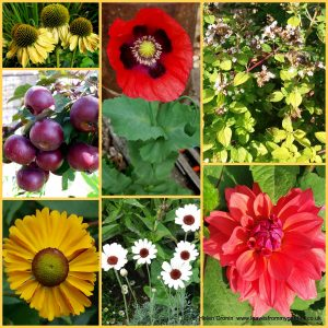 The-Garden-Photo-Challenge-to-prove-that-even-a-small-garden-can-be-interesting-all-year-Collage-of-photos-for-week-20
