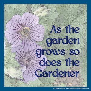 As the garden grows so does the gardener