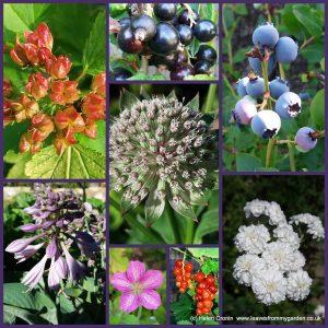 Dovewood Garden Photo Challenge week13