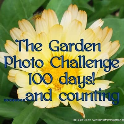 100 days of the Garden Photo Challenge – and a Freebie!
