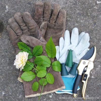 Advice for Safety in the Garden