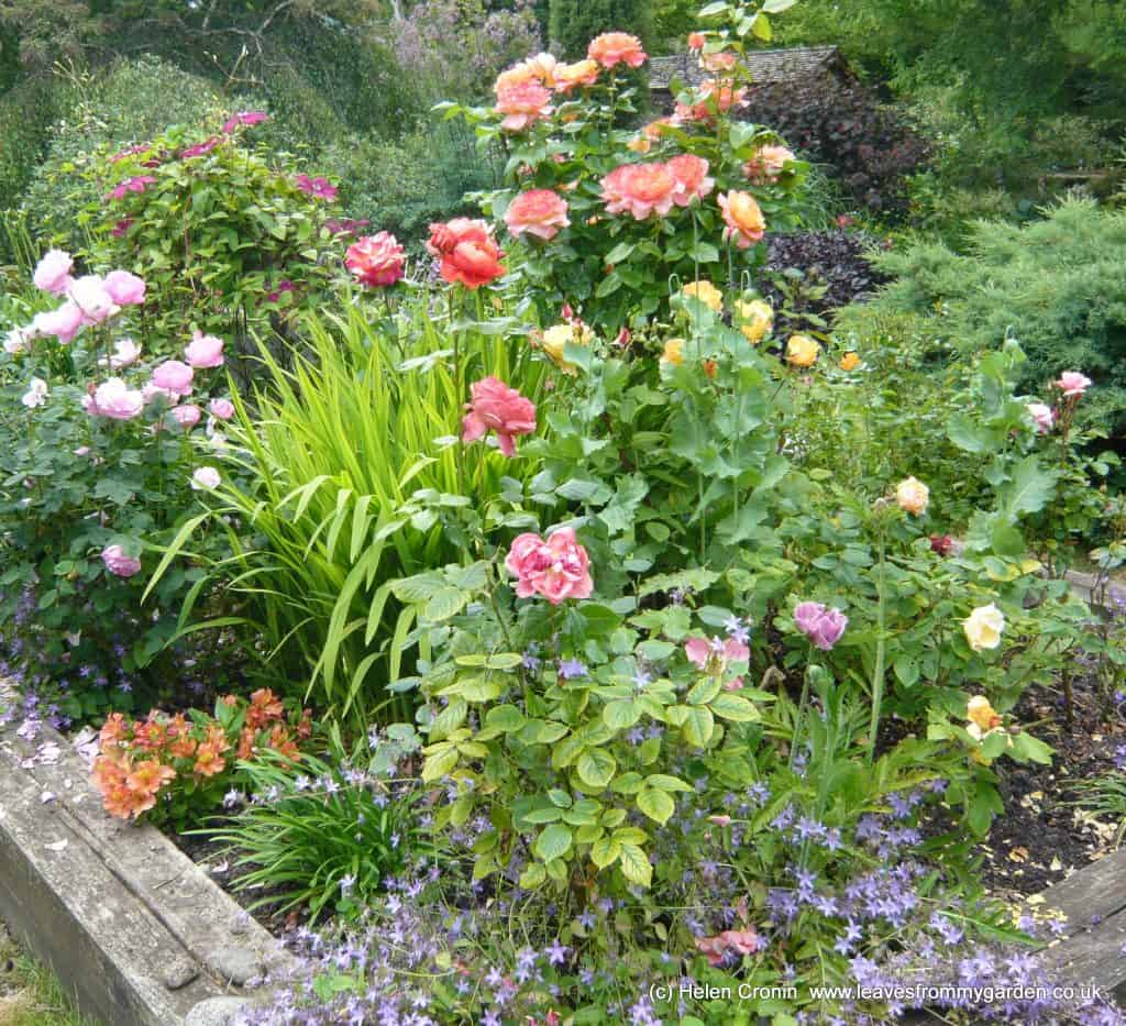 Rose garden in Stour Row