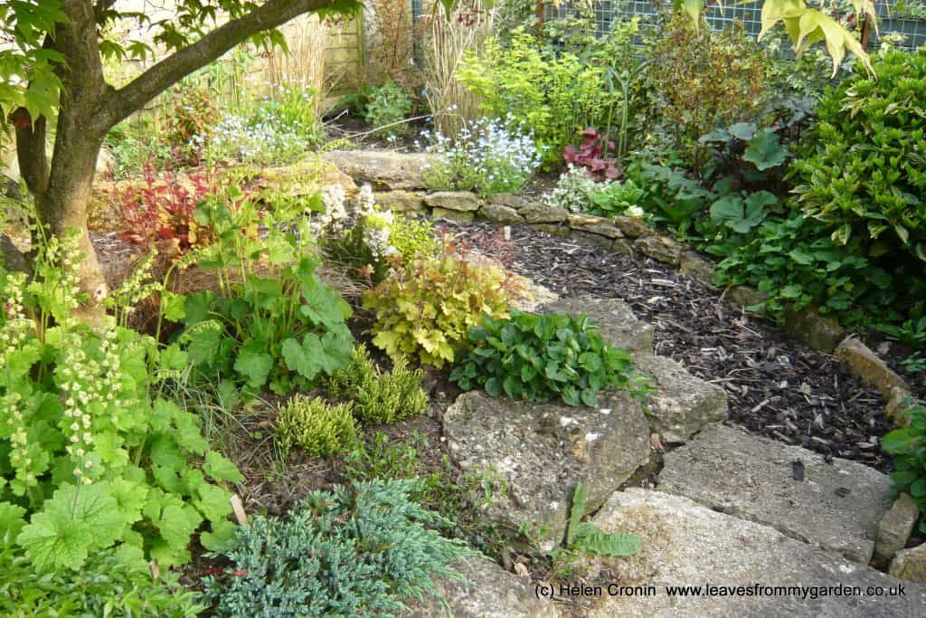 Photographing your own Garden: My Japanese Maple garden at Dovewood