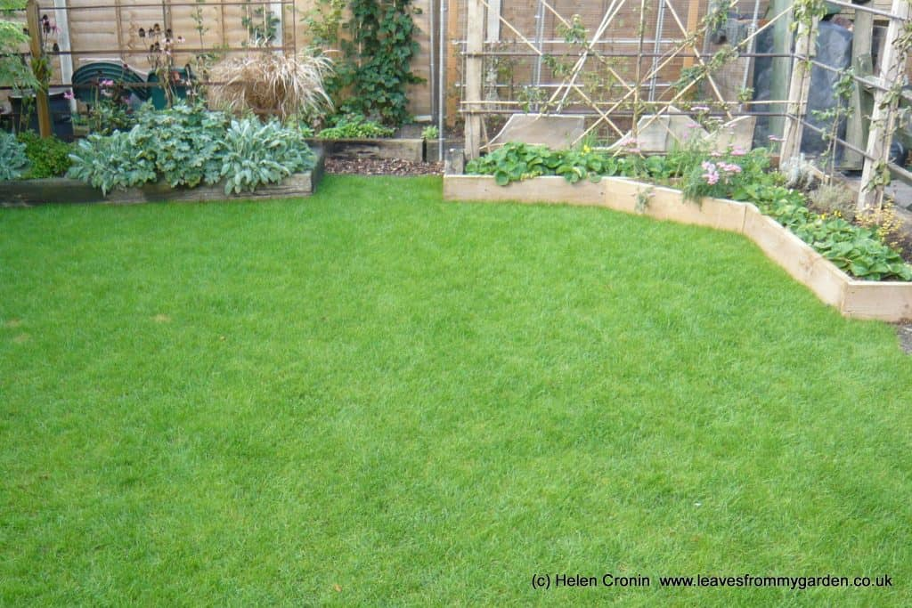 The new lawn at Dovewood