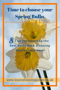 Lleavesfrommygarden.co.uk post about Spring Bulbs