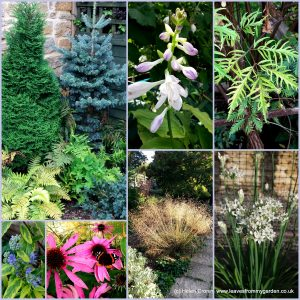The-Garden-Photo-Challenge-to-prove-that-even-a-small-garden-can-be-interesting-all-year-Collage-of-photos-for-week-21