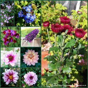 The-Garden-Photo-Challenge-to-prove-that-even-a-small-garden-can-be-interesting-all-year-Collage-of-photos-for-week-22