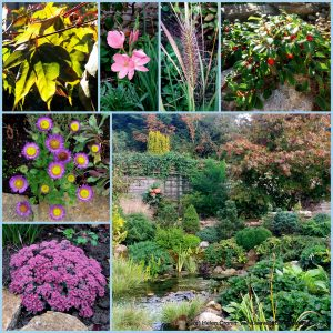 The-Garden-Photo-Challenge-to-prove-that-even-a-small-garden-can-be-interesting-all-year-Collage-of-photos-for-week-24