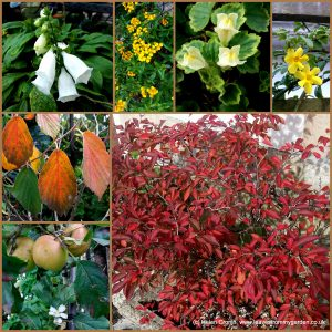 The-Garden-Photo-Challenge-to-prove-that-even-a-small-garden-can-be-interesting-all-year-Collage-of-photos-for-week-25