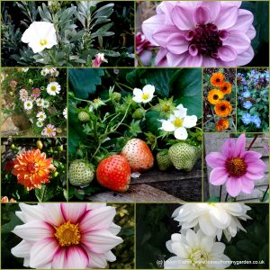 The-Garden-Photo-Challenge-to-prove-that-even-a-small-garden-can-be-interesting-all-year-Collage-of-photos-for-week-26