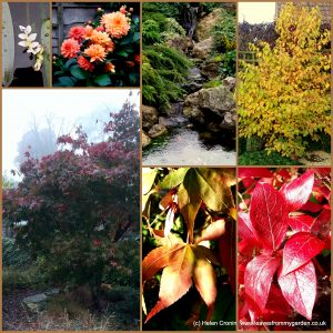 The-Garden-Photo-Challenge-to-prove-that-even-a-small-garden-can-be-interesting-all-year-Collage-of-photos-for-week-28