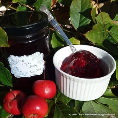 Crab Apple Jelly recipe at leavesfrommygarden.co.uk