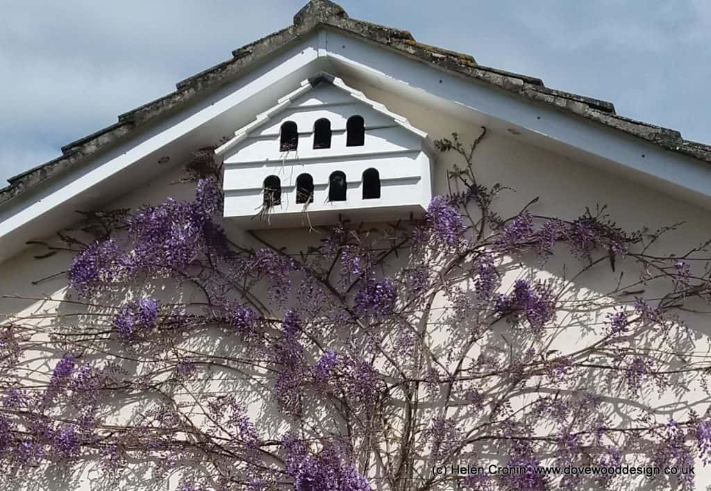 Wisteria: Pruning the Wisteria in the right way maximises the flower buds