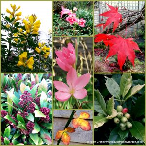 The-Garden-Photo-Challenge-to-prove-that-even-a-small-garden-can-be-interesting-all-year-Collage-of-photos-for-week-32