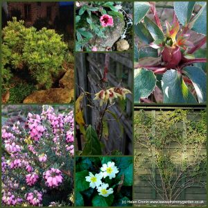 The-Garden-Photo-Challenge-to-prove-that-even-a-small-garden-can-be-interesting-all-year-Collage-of-photos-for-week-34