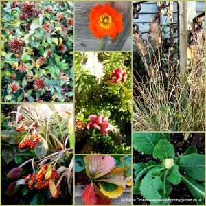 The-Garden-Photo-Challenge-to-prove-that-even-a-small-garden-can-be-interesting-all-year-Collage-of-photos-for-week-35