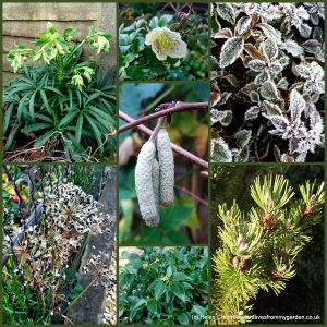 The-Garden-Photo-Challenge-to-prove-that-even-a-small-garden-can-be-interesting-all-year-Collage-of-photos-for-week-36