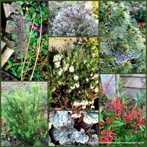 The-Garden-Photo-Challenge-to-prove-that-even-a-small-garden-can-be-interesting-all-year-Collage-of-photos-for-week-37