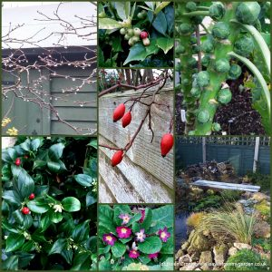 The-Garden-Photo-Challenge-to-prove-that-even-a-small-garden-can-be-interesting-all-year-Collage-of-photos-for-week-38