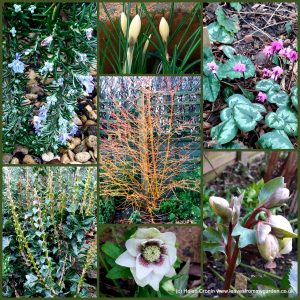 The-Garden-Photo-Challenge-to-prove-that-even-a-small-garden-can-be-interesting-all-year-Collage-of-photos-for-week-39