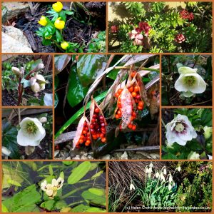The-Garden-Photo-Challenge-to-prove-that-even-a-small-garden-can-be-interesting-all-year-Collage-of-photos-for-week-42