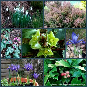 The-Garden-Photo-Challenge-to-prove-that-even-a-small-garden-can-be-interesting-all-year-Collage-of-photos-for-week-43