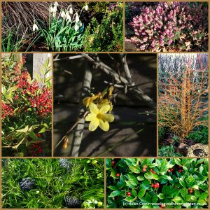 The-Garden-Photo-Challenge-to-prove-that-even-a-small-garden-can-be-interesting-all-year-Collage-of-photos-for-week-45