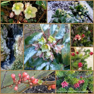 The-Garden-Photo-Challenge-to-prove-that-even-a-small-garden-can-be-interesting-all-year-Collage-of-photos-for-week-47