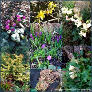 The-Garden-Photo-Challenge-to-prove-that-even-a-small-garden-can-be-interesting-all-year-Collage-of-photos-for-week-46