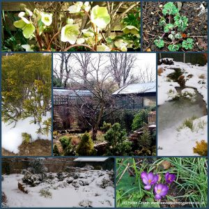 The-Garden-Photo-Challenge-to-prove-that-even-a-small-garden-can-be-interesting-all-year-Collage-of-photos-for-week-48