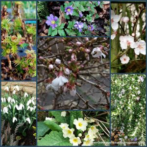 The-Garden-Photo-Challenge-to-prove-that-even-a-small-garden-can-be-interesting-all-year-Collage-of-photos-for-week 49