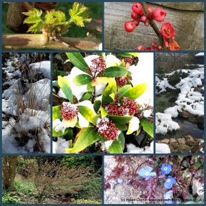 The-Garden-Photo-Challenge-to-prove-that-even-a-small-garden-can-be-interesting-all-year-Collage-of-photos-for-week-50