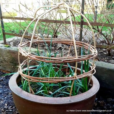 How to make your own Plant supports and protection from natural materials using your garden prunings