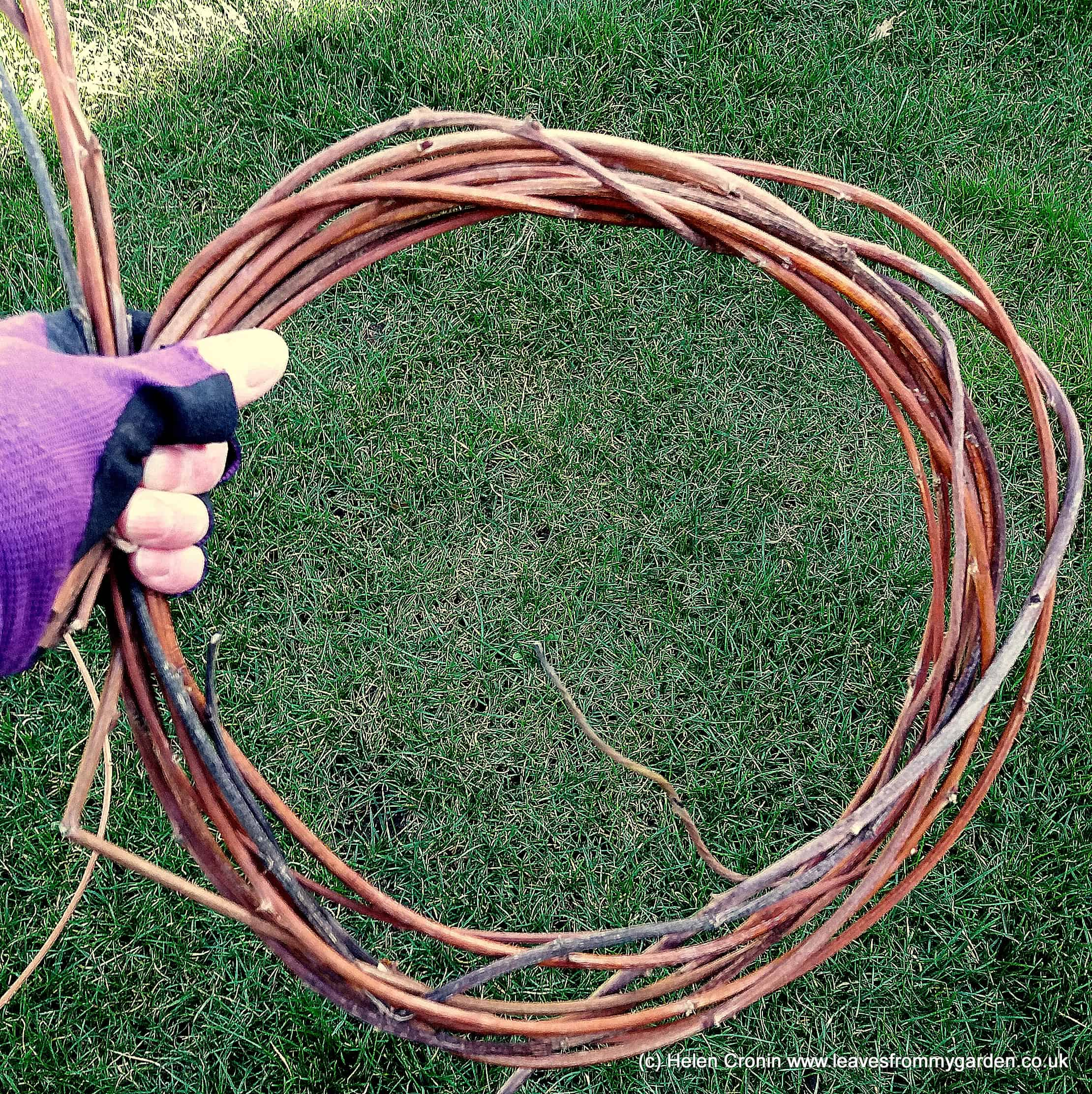 Gently bend the stems round to start forming the desired shape and tie the end in with more twine